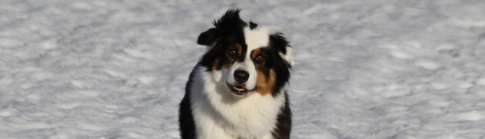 Hunddagiset Tasstryck